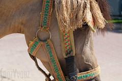 A Resigned Pony