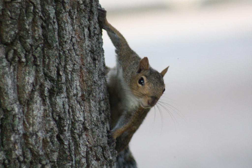 Squirrel Invasion 8