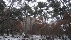 IMG_8541 Die Ruine Rauheneck kommt in Sicht, 24.1.2010