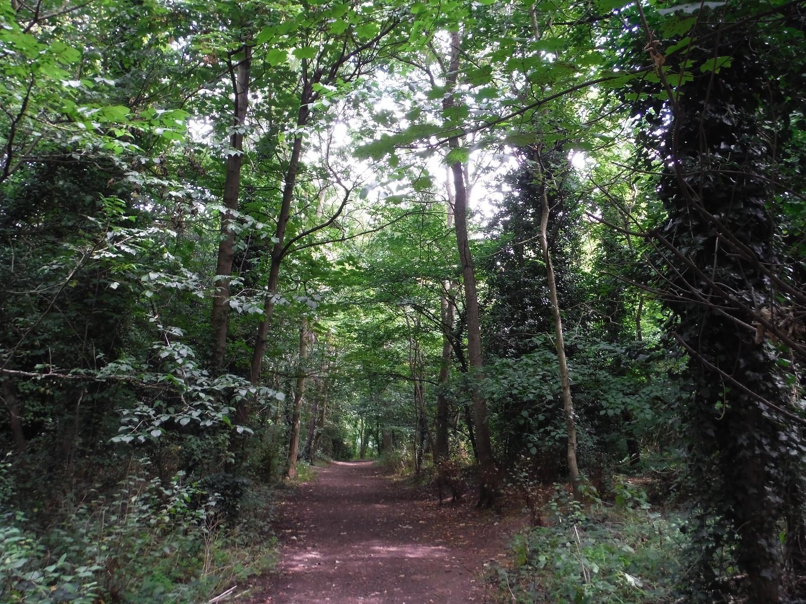 Tree-lined Path SWC Walk Short 11 - Wanstead Park