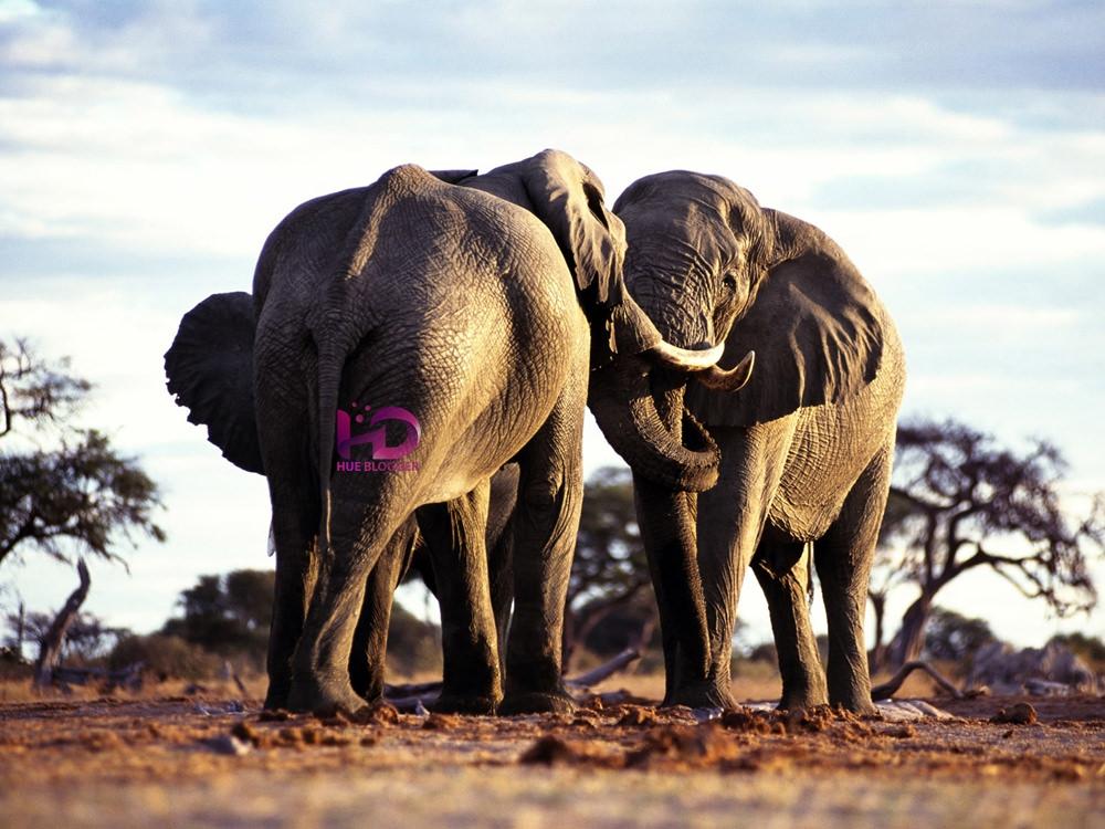 50+ hình ảnh động vật hoang dã chất lượng cao miễn phí
