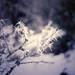 Frost by lichtspuren