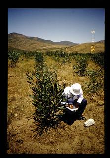 Invesstigation For Forertation In Semi-arid = 半乾燥地の植林調査