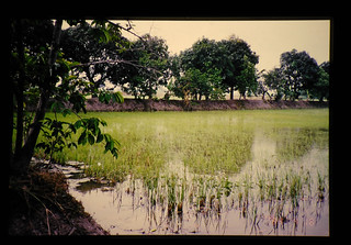 Field Of 'square' Farming  = 四角農法圃場