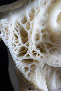 Fish vertebra