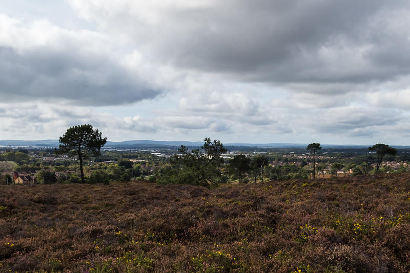 An overcast day on Canford Heath