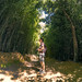 Bambu Forest by Alvaro RP