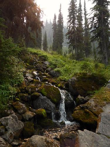 mountrevelstoke waterfall pinetrees landscape