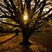 The Autumnal Equinox (London's Hyde Park, United Kingdom 2016) by Alex Stoen
