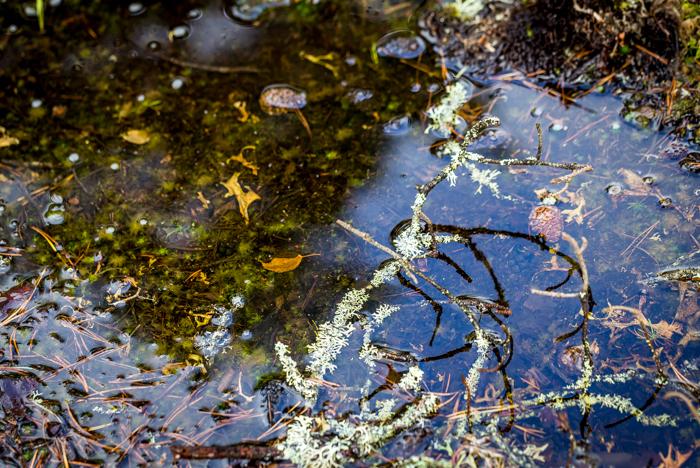 syksy syyskuu sade metsälammikko lammikko vesi (1 of 1)