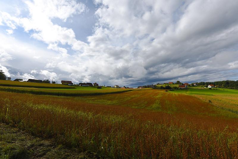 Komberg - Fields