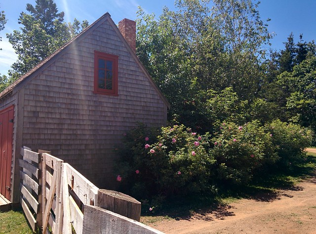 Around the farm (3) #pei #princeedwardisland #cavendish #greengables #greengableshouse