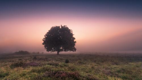 2017 holland netherlands nederland bussum hilversum heather heide tree sun clouds sunrise light outdoor sony a7rii sonyfe1635mmf4