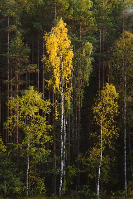 Autumn in Finland, RICOH PENTAX K-1, Sigma 70-200mm F2.8 EX DG Macro HSM II