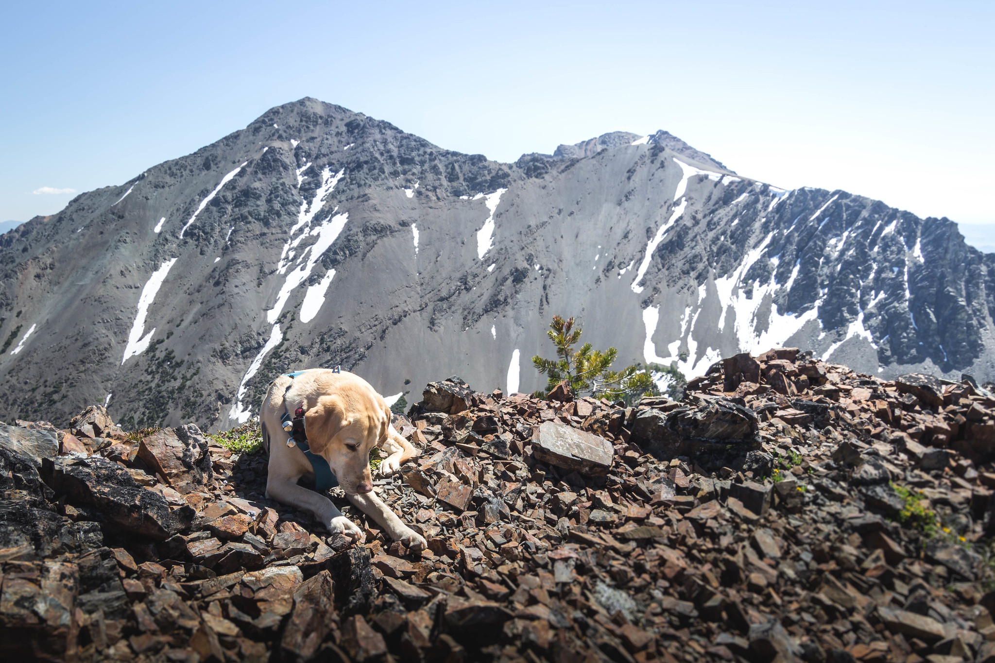 Summit dogs on Shelokum Mountain