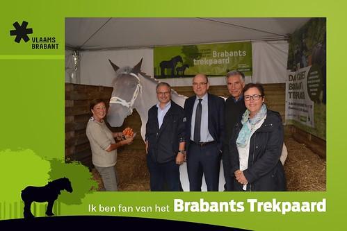 Brabants trekpaard