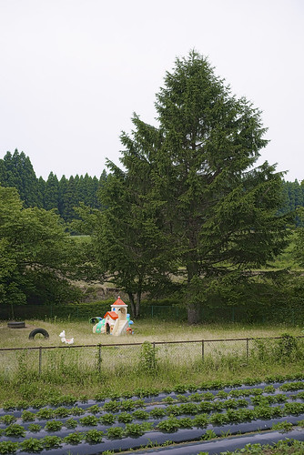 JF C6 16 004 熊本県阿蘇市波野  Sony A7S × APO SUMMICRON-M 50mm F2 ASPH.#