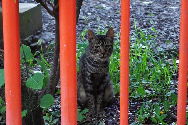 Today's Cat@2017-08-08