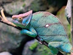 Reptile #1