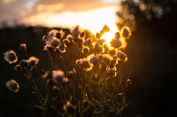elokuu auringonlasku yötaivas iltarusko luontokuva kukka (1 of 1)