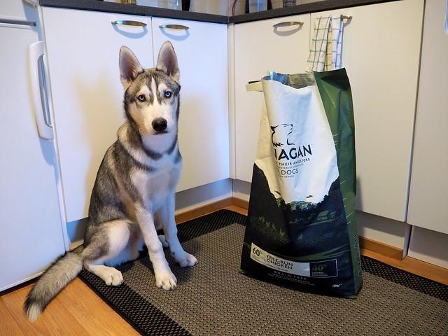 koiranpennun ruokinta