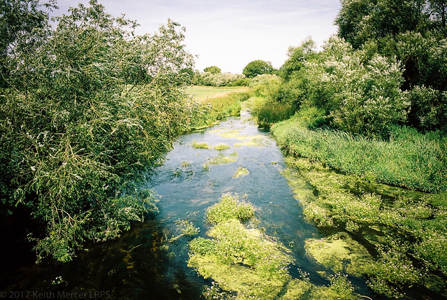 Lush Green Stream