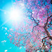 spring hd wallpaper by hdwallpaperspop