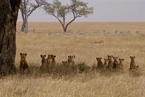 Looking at the menu (Serengeti National Park - Tanzania)