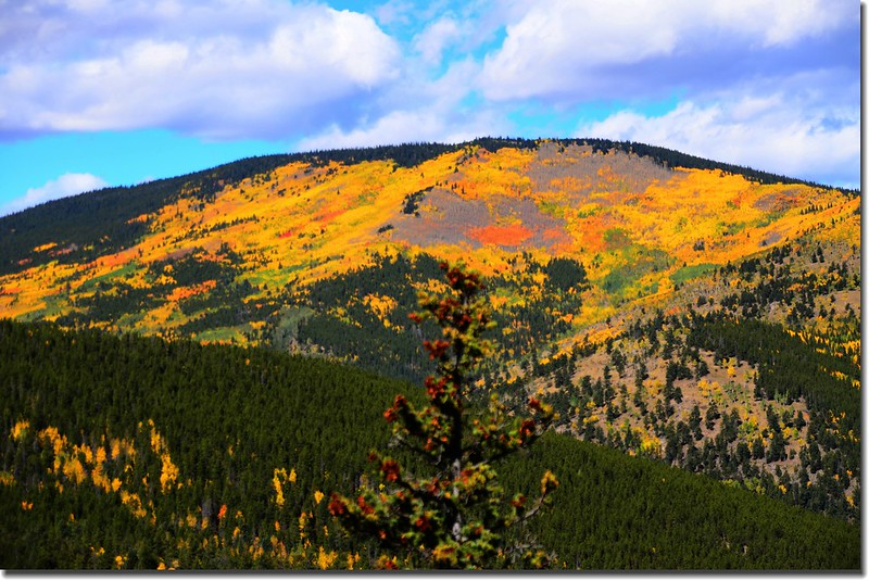 Fall colors, Mount Evans Scenic Byway, Colorado (42)