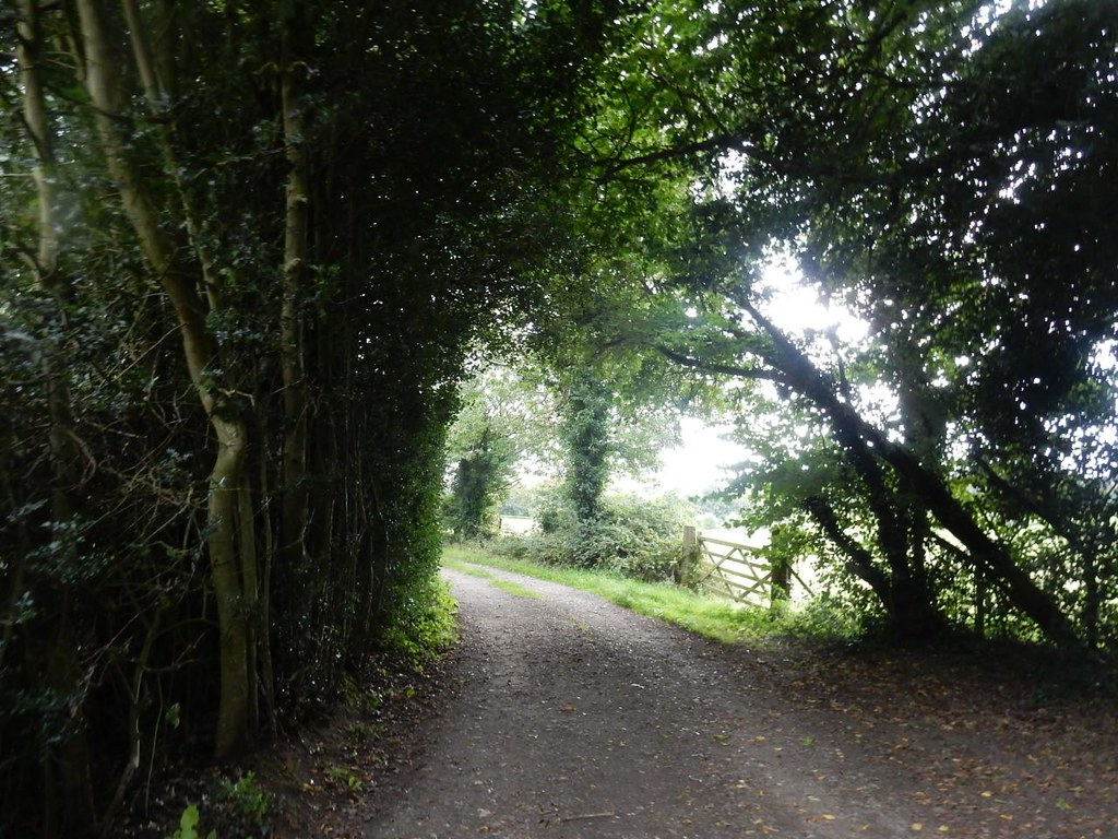Leafy lane Wendover Circular via Swan Bottom