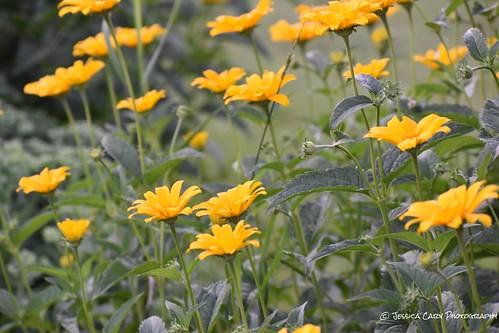 amateurphotographer amateurphotography upstatenewyork adirondacks landscapephotography naturephotography photography beautiful wow flowers