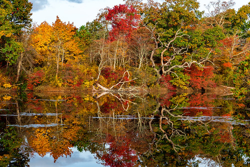 stillness morning autumn westbrookpond longisland newyork fall fallcolors fallfoliage rpg90901 reflection trees symmetry suffolkcounty pond outdoor landscape serene greatriver water foliage canon 6d canonef24105mmf4lisusm 2015 october 0835