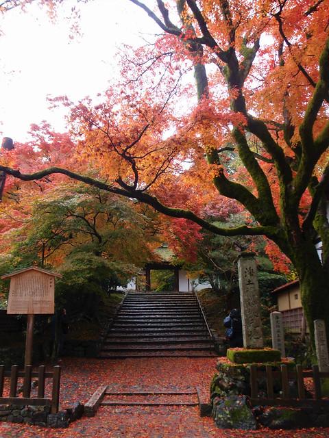 anrakuji_kyoto029