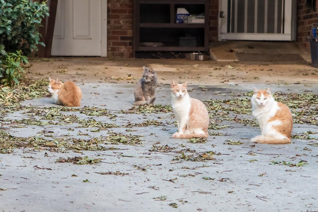 Cats next door