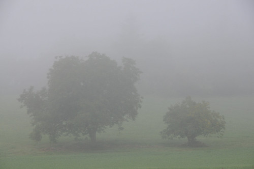 The big and the small one in the mist
