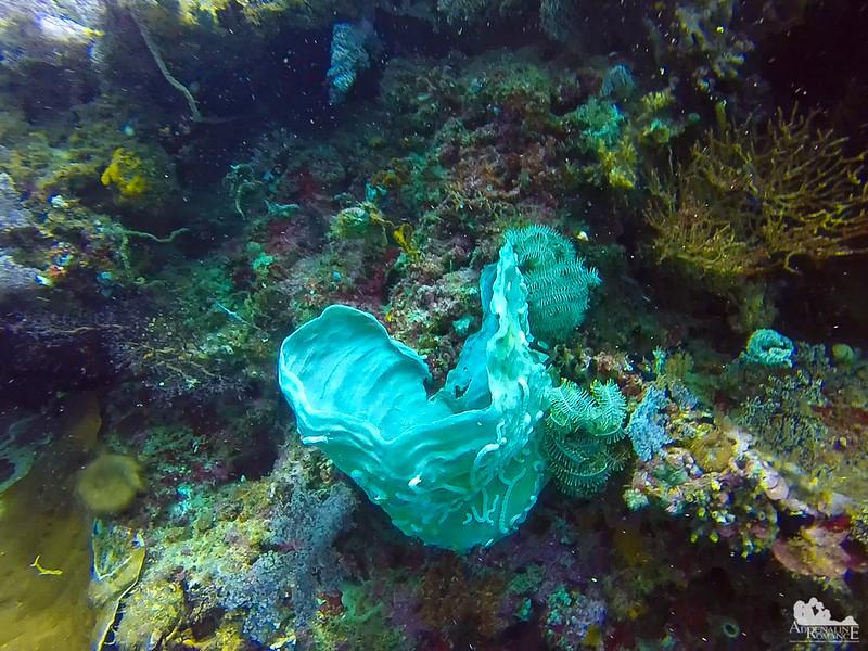 Hexactinellid sponge