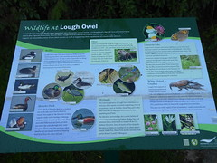 Lough Owel wildlife