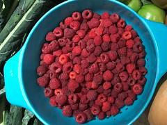 raspberries IMG_0208