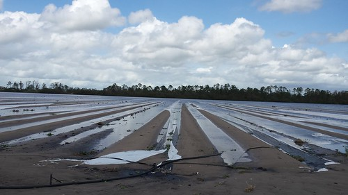 Growers analyze damage after hurricanes