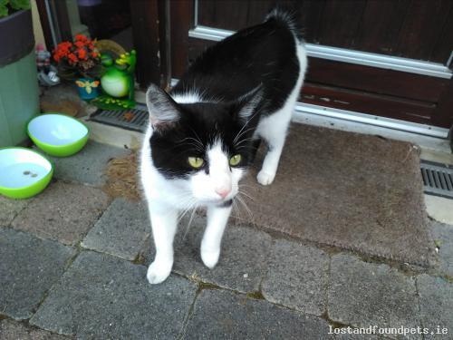 Sat, Aug 12th, 2017 Found Male Cat - Roseberry Hill, Kildare