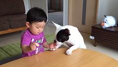 Đáng yêu khoảnh khắc bé 1 tuổi òa khóc vì bị cún cưng giành bánh