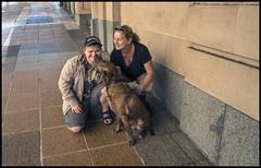 Benjamin finds Red Dog in Brisbane-1=