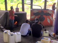 Distilling at the co-op palenque