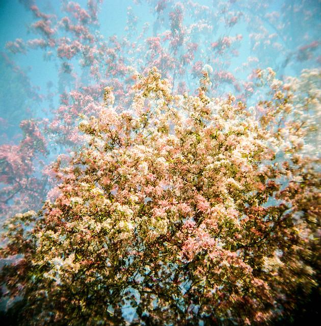 Holga au printemps