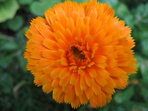 22 orangeflower