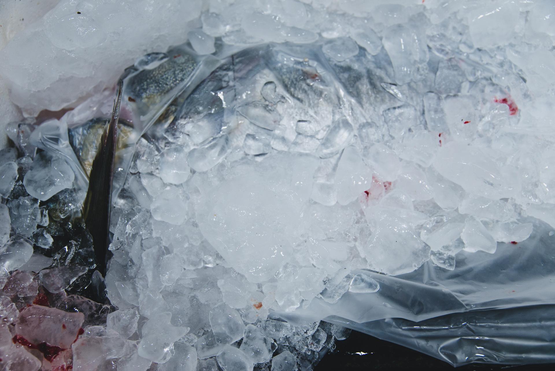 targ rybny tsukiji