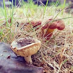 Autumn mushrooms.