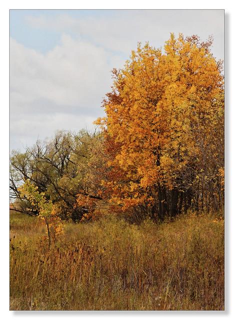 Autumn-ish