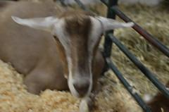 Santa Clara County Fair 2017