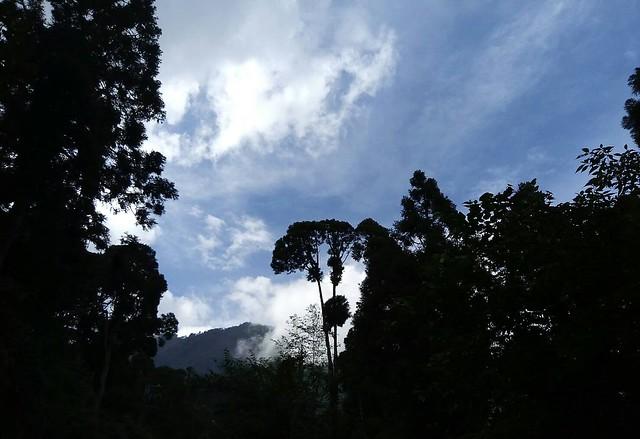 溪頭的山嵐 (3)